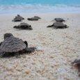 Seychelles Island luxury on Denis-Island