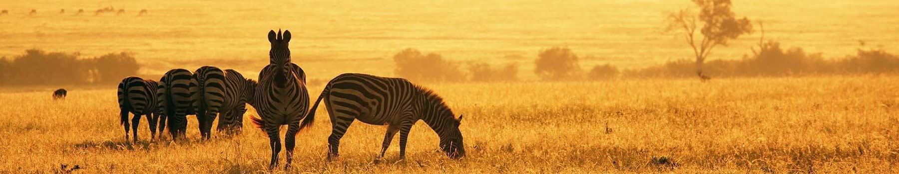 how to change background on safari