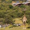 Mahali Mzuri Deluxe Camp Masai Mara Wild animals