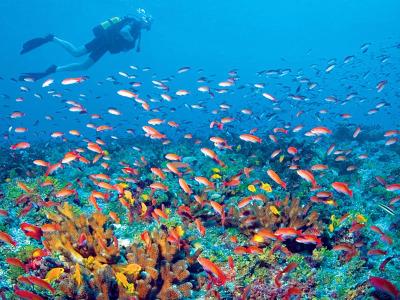 zanzibar diving holiday