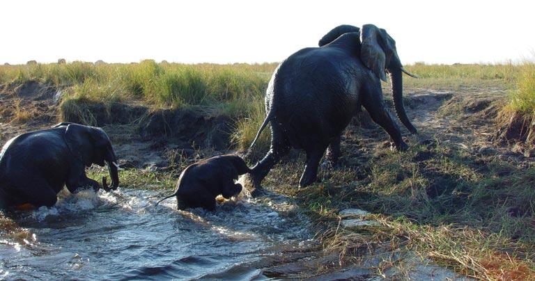 Botswana Safari Focus
