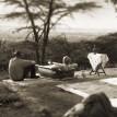 Mara Migration Safaris