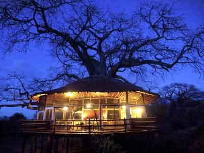 Tarangire Treetops Lodge Tanzania