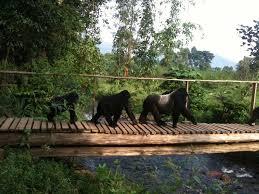 Uganda Safaris & Tour