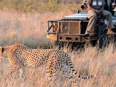 Safari Yellow Fever Update
