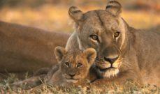 Durban and Safari