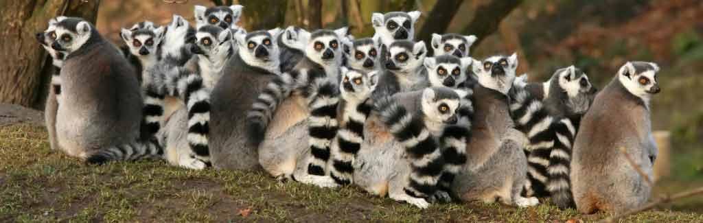 madagascar tour holidays lemurs